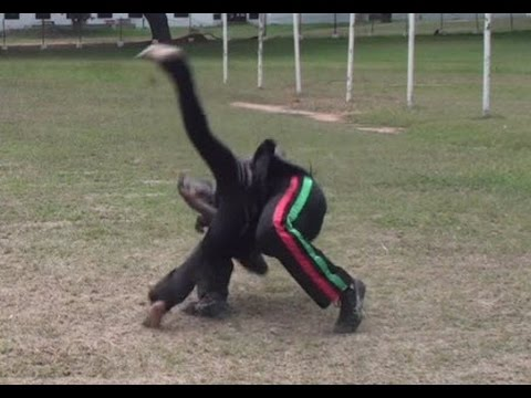 Part 7: Capoeira Wrestling and Striking